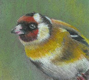 Goldfinch by Rachel Miller