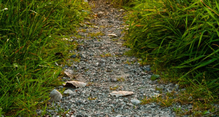 FEATURE IMAGE Narrow Path